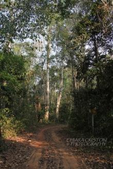 Path into the jungle