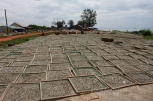 Fields of drying sardines