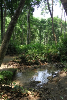 Water and jungle