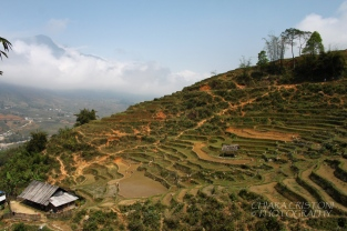 Sa Pa - Terraced rice fields