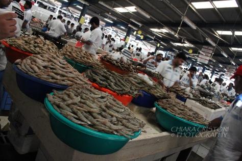 At the Dubai fish market