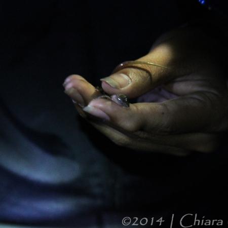 Lizard between fingers