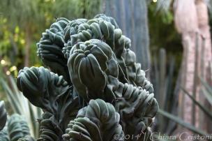 """Morocco Marrakech """"Jardin Majorelle"""" texture"""