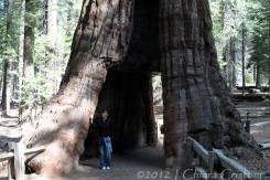 "Sequoia ""Yosemite Park"""