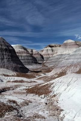 "badlands ""Petrified Forest"" Arizona USA"