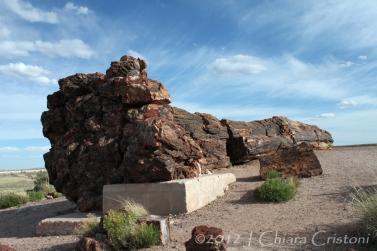 """Petrified Forest"" Arizona USA"