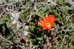 Orange in nature
