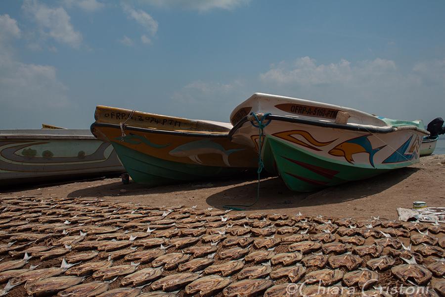 """""""Sri Lanka"""" Kalpitiya fishing boats"""