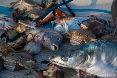 """Sri Lanka"" Kalpitiya ""Alankuda Beach"" catch fish"