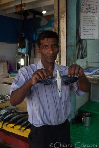 """Sri Lanka"" Kandy market fish"