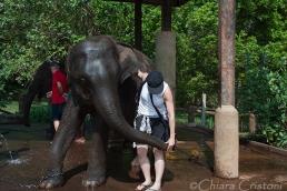 """Sri Lanka"" Pinnawala elephant orphanage"
