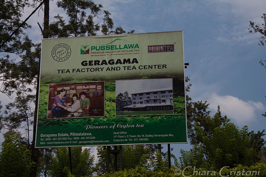 """""""Sri Lanka"""" Geragama Tea plantation"""