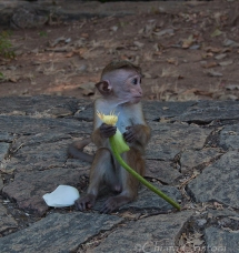 Monkey at the Cave Temple