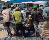 """Sri Lanka"" Negombo Fish Market shark"