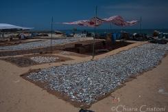 """""""Sri Lanka"""" Negombo Fish Market dried"""