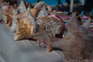 "Belize ""Caye Caulker"" seashells"