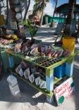 """Belize """"Caye Caulker"""" stall seashell"""