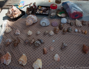 Debra's seashells