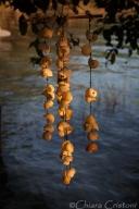 Lake shells