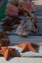 Seashells and starfish ready for sale